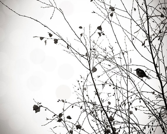 Black and white prints bird photography decor bird in a tree
