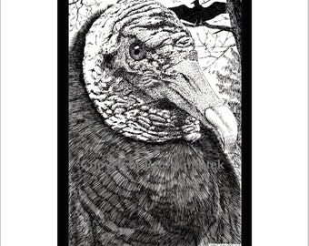 Black Vulture Pen and Ink Print