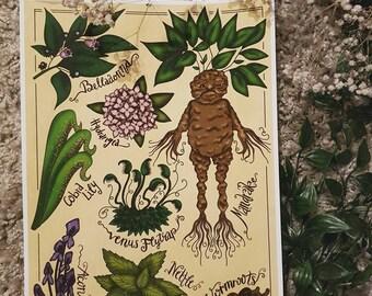 Art Print: Herbology II