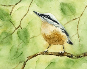 Original  Watercolor Red-Breasted Nuthatch 5 x 7