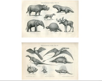 c. 1894 - FOSSILS OF DINOSAURS - original antique prints - prehistoric extinct animals - stegosaurus triceratops Jurassic Period - set of 2
