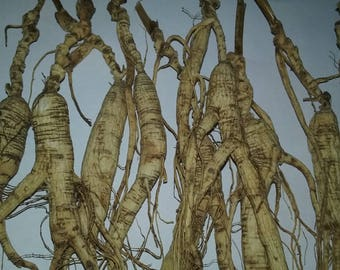 454 Gram Dry Wild Ginseng Root