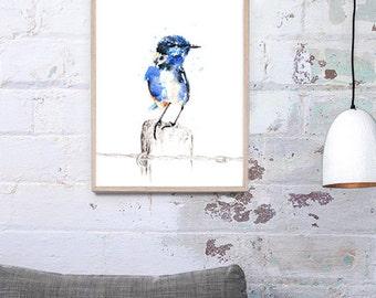Australian Splendid fairywren, Australian Native Bird, Fairywren Art Print A3, A2 & A1 Bird Watercolour Illustration giclee Art Print