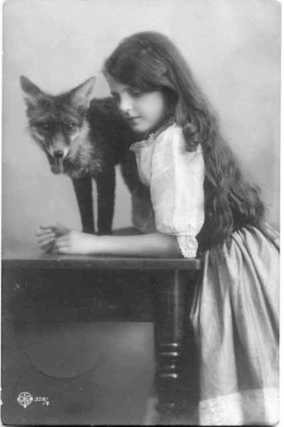 Fox and girl unusual vintage photography victorian edwardian