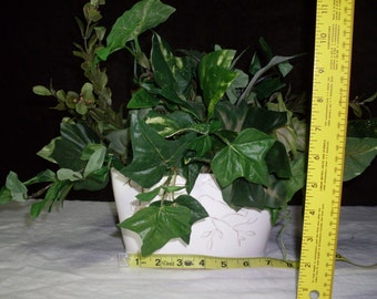 White ceramic planter with multiple green plants.