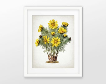 Yellow Flower Print - Yellow Flower Art - Flower Wall Art - Yellow Room Decor - Botanical Print - Single Print #1585 - INSTANT DOWNLOAD