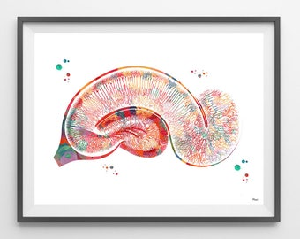 Brain Pyramidal Neurons watercolor print hippocampus poster anatomy art Pyramidal cells giclee print golgi neurology science art medical art