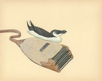 Razorbill.  Original collage by Vivienne Strauss.
