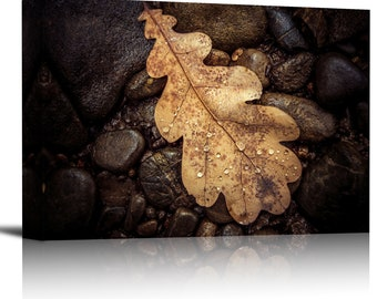 Fall Wet Oak Leaf on Rocks Art Print Wall Decor Image - Canvas Stretched Framed