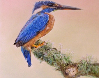Kingfisher an ORIGINAL painting by Collette Hughes