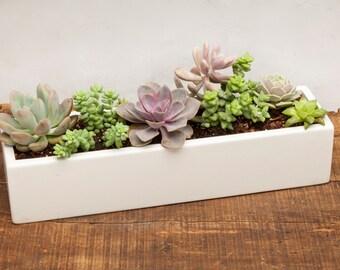 Concrete Planter, Concrete, Planter, Succulent Planter, Outdoor Planter, Indoor Planter, White, Herb Planter, Cement Planter