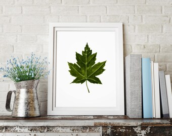 Green Maple Leaf, Watercolor Green Art, Art Cute Clipart, Love Decor Green, Botanic Poster, Herb Print, Indoor Print, Plant Office.