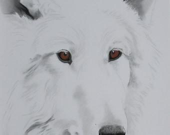 White Wolf original art pastel wildlife