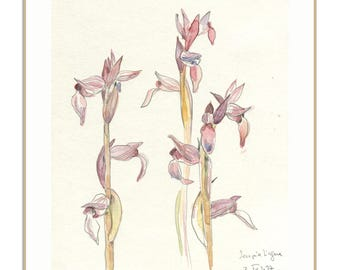Wild flowers sketch - botanical PRINT of wild orchideas drawing - watercolor and pencil drawing on my sketch journal by Catalina