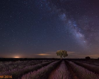 Milky Way over lavender fields