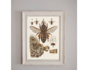 Vintage Bumble Bee Poster // Nature Journal // Wall Art