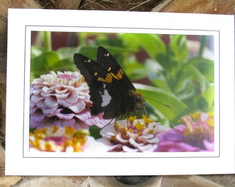 Note Card -  Skipper Butterfly - Zinnia - Photo Greeting Card - Garden Photography Cards