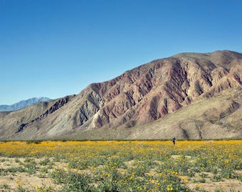 Flowers in the Desert - Landscape Photography - California
