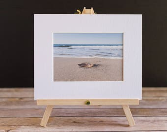 Fine Art Nature 5x7 Matted Print - The Sand Dollar