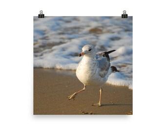 seagull print | coastal photography | wall art