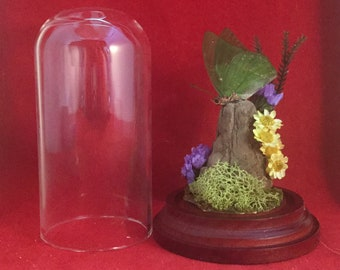 13-b Entomology Taxidermy Butterfly Antique Victorian Style Glass Dome Display specimen collectible