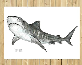 Illustration tiger shark, size of sheet in watercolor A3, A4 or A5, tiger shark