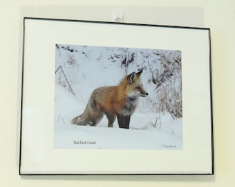 Foxtails 11x14 framed fox picture with a matted print 8x10