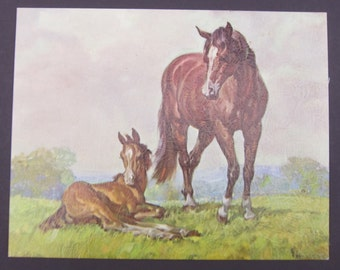 Vintage Print Horses Elmer Brown 8 by 10 Inches 60's Western Horses