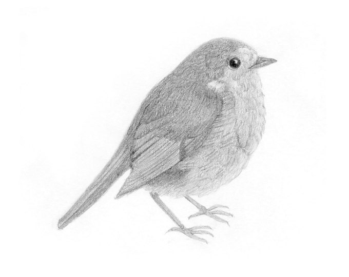 Bird Drawing Black and White Pencil Nature Illustration Whimsical