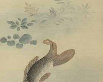 Antique Japanese Art Painting Koi Fish Carp Hanging Scroll - 131001