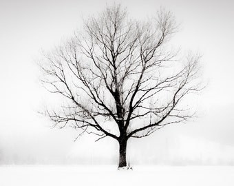 Black and White, ,  Lone Tree Photography - Contemporary Fine Art Print - Oversized Art Print  - Minimalist Photography