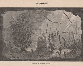 Antique Aquarium Seahorses Fishes Newpaper Print Engraving 19th German FREE SHIPPING