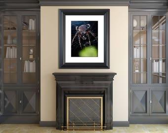 Animal / Wildlife Photograph Backyard Buddy - Fine Art Canvas - Home Decor Wall Art Prints Unframed