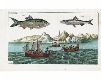 Original Antique Hand colored Engraving of Fish-   Over 200 + Years Old and in a very fine condition