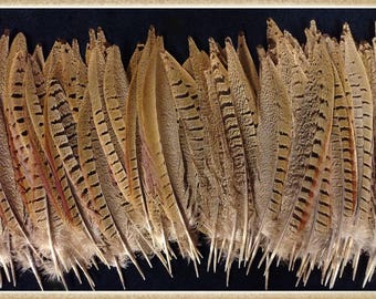 """15 -7 1/2"""" to 9"""" pheasant tail feathers from Ringneck rooster pheasants, pheasant feathers"""