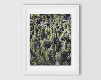 Altitude | California Photography, Forest, Rustic