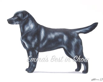 Lab Labrador Retriever Dog - Archival Original Fine Art Print - AKC Best in Show Champion - Breed Standard - Sporting Group