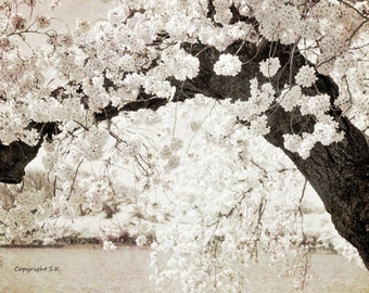 Japanese Cherry Blossom Photograph, Washington DC Cherry Blossom Art, Pale Pink White Beige Wall Art 8x10