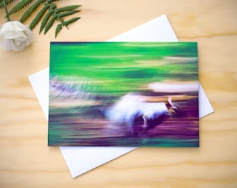 Blank greetings card, any occasion card, wildlife greetings card, photographic greeting card, photo greeting card, squirrel card, birthday