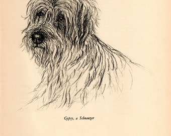 "1938 Vintage DOG PRINT from a book of Sketches by K.F. Barker ""Gypsy, a Schnauzer"""