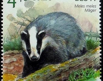 European badger Meles meles EESTI -Handmade Framed Postage Stamp Art 10602AM