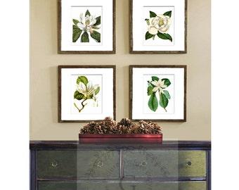 Magnolia decor BOTANICAL PRINT set of 4 white flower Magnolia Art Prints Home Decor Wall Hanging Art Prints 8x10 Gnosis Picture Archive