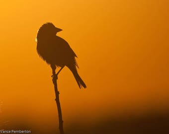 Silhouette Photography-Bird Photography-Nature Photography-Wildlife Photography-Art-Home Decor