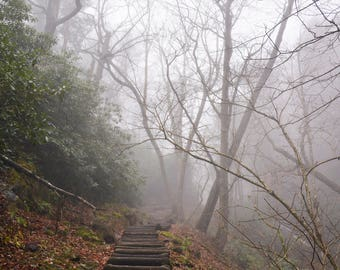Fog and Stairs in Forest Photograph - Gatlinburg Tennessee - Digital Download - Photography