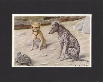 Chihuahua Print 1919 Vintage Dog Print by Louis Agassiz Fuertes Small Picture Mounted Mexican Hairless Dog Mexican Hairless Print Chihuahua