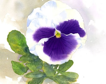 Pansy - Watercolor