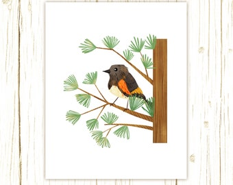 American Redstart Print -- bird art --black bird art 52 birds stephanie fizer coleman illustration