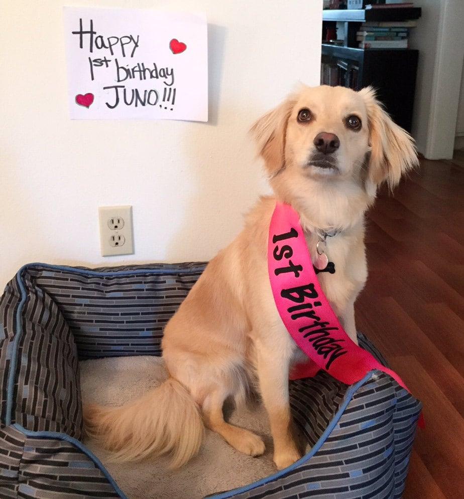 Marco marco del perro cumpleaños del animal doméstico del