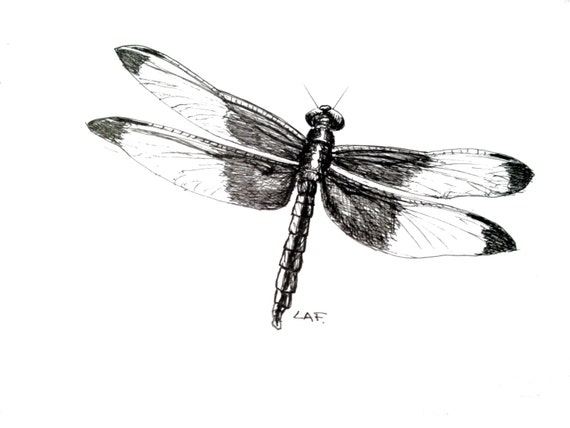Dragonfly artinsect art insect prints dragonfly printsoriginal pen and ink drawinglimited edition print dragonfly black and white art