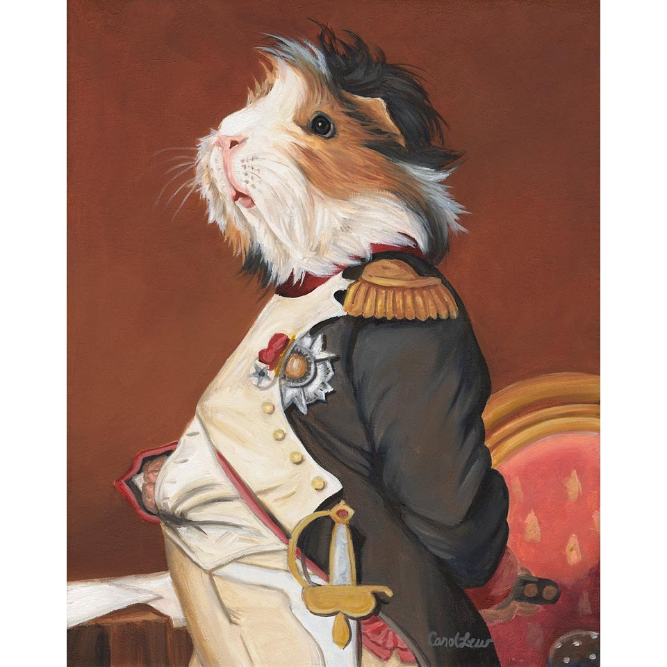 Guinea pig prints napoleon guinea pig clothes animals in zoom jeuxipadfo Gallery